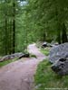 A typical pleasant forested path by Zermatt